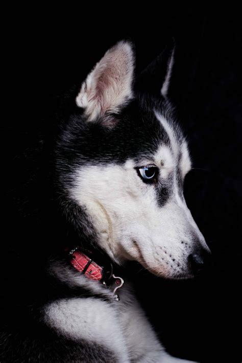 cost  adopt  dog