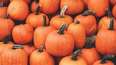 Pumpkin Wallpapers Autumn Harvest