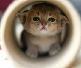 baby cats top hd wallpapers small cats babies wallpaper