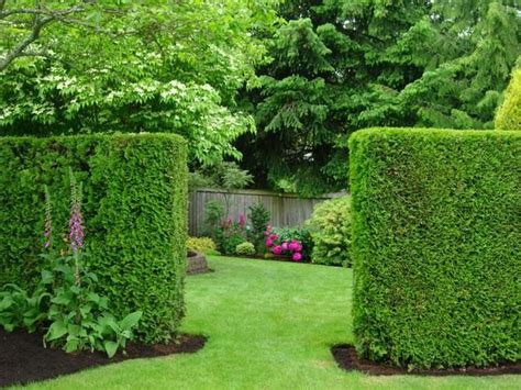 hedge gardens beautiful summer gardens gardening pinterest hedges privacy hedge and gardens