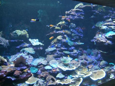 aquarium sea sea world aquarium durban south africa address phone number attraction reviews tripadvisor