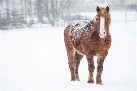 horses cold weather senior horse winter caring older does equine very coat companions affects younger knowledge planning than health