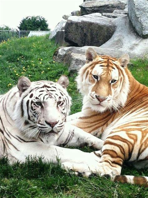 Such Beauty Big Cats Animals Beautiful