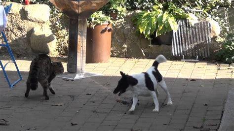 hund  katze dog  cat youtube