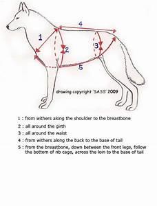 H Back Sledding Harness  U2013 Sass Dog Equipment