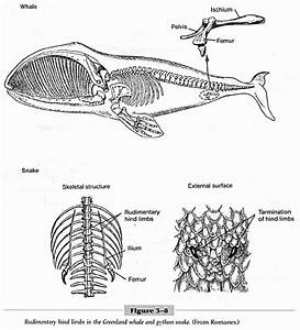 Descent with Modification: a Darwinian View of Life  Vestigial