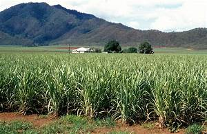 File:CSIRO ScienceImage 3729 Sugar cane crop with mountain ...