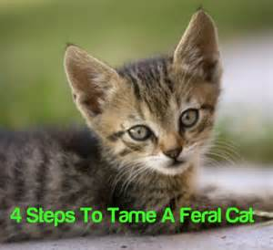 how to a feral cat 17 best ideas about feral cats on outdoor cat