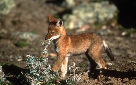 celebrate world wildlife day   baby animals