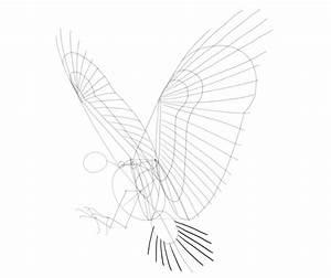 Draw Hawk Wwwimagenesmicom