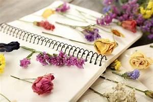 Comment Faire Secher Une Rose : comment faire s cher des fleurs pour scrapbooking diy ~ Melissatoandfro.com Idées de Décoration