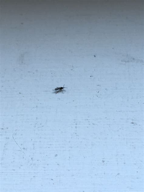 small flying bugs gathering  bedroom windows   expert