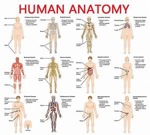 Full Picture Real Human Body