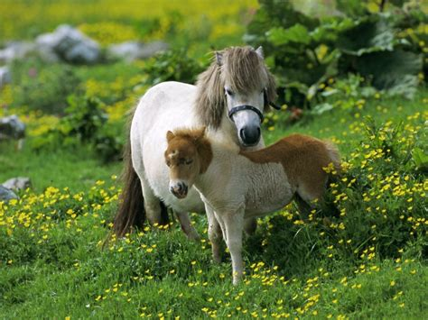 Beautiful Nature Animal Wallpapers - nature animals horses 1600x1200 wallpaper animals horses