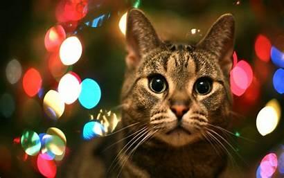 Pets Christmas Wallpapers Pet Animals Cat Cats