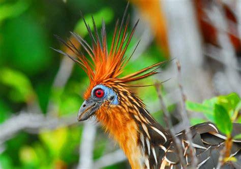 10 Bizarre Bird Species Listverse