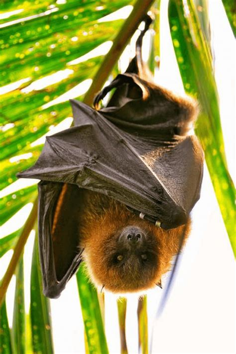 bats  blind  questions  answers
