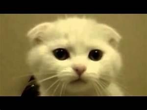 Funny CAT Talki... Funny Cat Videos