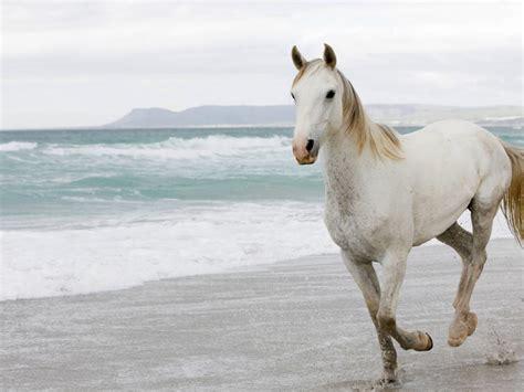 White Horse Beach Sea Waves Desktop Wallpaper