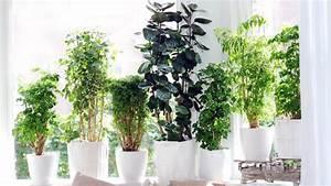 Arbuste D Intérieur : faites entrer les tropiques dans votre int rieur avec le ~ Premium-room.com Idées de Décoration
