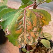 Plant Disease Control Products For Organic Growers