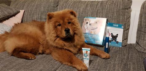 testbericht emmi pet ultraschall zahnbuerste fuer hunde