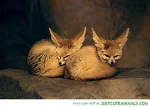 Cute Wild Baby Animals Sleeping