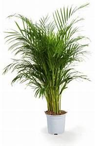Grande Plante D Intérieur Facile D Entretien : plante exotisme tout ~ Premium-room.com Idées de Décoration