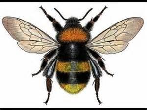 Bumble Bee Drawings