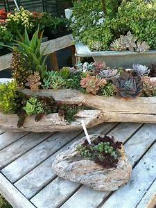 Ou Acheter Du Bois Flotté : d co bois flott plantes succulentes la nature s ~ Teatrodelosmanantiales.com Idées de Décoration