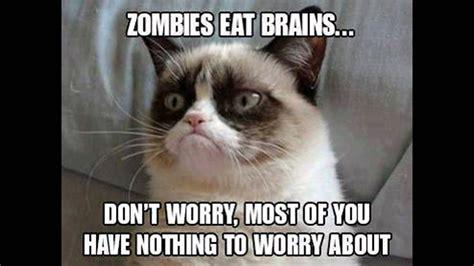 Grumpy Cat Meme Clean - grumpy cat memes clean cute cats