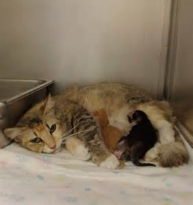 Sad Cat and Dog in Animal Shelter