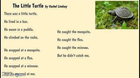 He snapped at the mosquito, he snapped at the flea. The Little Turtle by Vachel Lindsay - YouTube