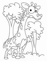 Giraffe Coloring Printable Giraff Bestappsforkids Colouring Adults Patient Ambitious Colors Preschool Animals Animal Golfrealestateonline sketch template