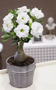 Blumen Für Fensterbank : die besten 17 ideen zu bl hende zimmerpflanzen auf pinterest unter freiem himmel kleine ~ Markanthonyermac.com Haus und Dekorationen