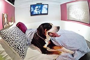 Hotel Pour Chien : un h tel 4 toiles pour chiens et chats presselib ~ Nature-et-papiers.com Idées de Décoration
