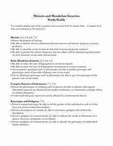 Meiosis And Mendelian Genetics