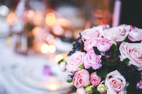 images bokeh plant petal pink wedding flowers