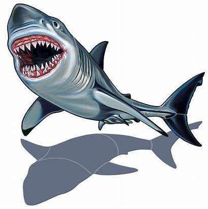 Shark Cartoon Cliparts