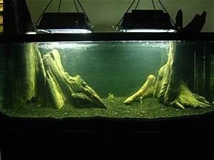 Newly planted 75 gallon angel tank Aquarium Advice