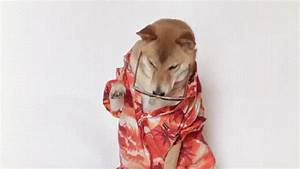 Funny Cool Dog GIF by Menswear Dog - Find & Share on GIPHY