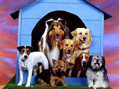 Dog Breed Wallpapers Backgrounds Desktop Animal Mobile