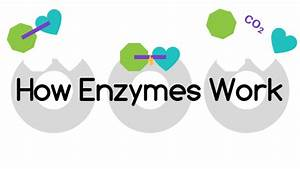 How Orenda Enzymes Actually Work