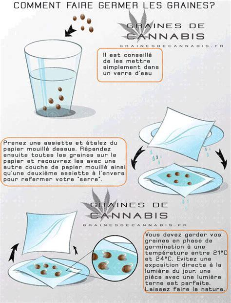 comment commencer a cultiver du cannabis