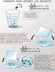 Comment Faire Germer Une Graine : comment germer des graines de cannabis ~ Melissatoandfro.com Idées de Décoration