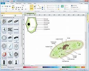 Cells Diagrams