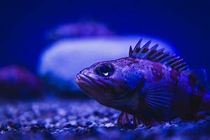 Deep Sea Fish | Some kinda deep sea fish with big eyes and ...