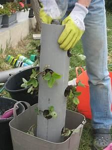 Awesome idee de plantation pour jardin 5 des fraises en for Awesome idee de plantation pour jardin 5 des fraises en hauteur dans un tube pvc creations et