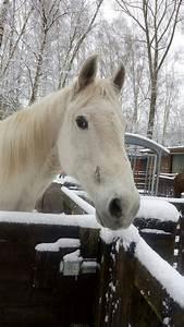 Zaunbau Kreis Aachen : winterwunderland auf dem gnadenhof tierschutzverein kreis aachen e v ~ Markanthonyermac.com Haus und Dekorationen