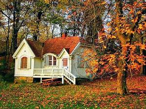Houses, Beautiful, Small, Forest, House, Peaceful, Rest, Calm, Quiet, Autumn, Nice, Nature